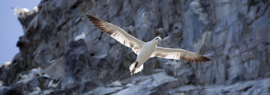 Randonnées avec observation des oiseaux : 6 sites à découvrir