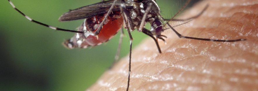 Comment se protéger face au virus Zika en voyage ?