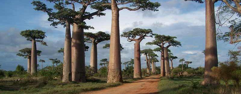 6 idées de treks à Madagascar