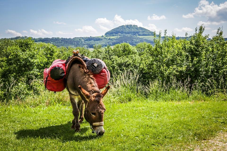 randonner en famille avec un âne