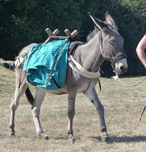 parcours de randonnée avec un âne