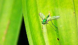 Randonnée à la Réunion, vêtements anti-moustiques