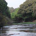 randonnée au Bénin_la rivière Pendjari (auteur Wengmann)