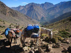 La mule, souvent unique moyen de transport