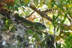 Reptile à Saint Maurin
