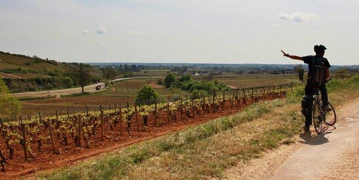 Vignoble de Chassagne Montrachet et Saint Aubi