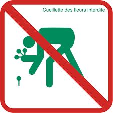 réndonnée éco-responsable cueillette interdite