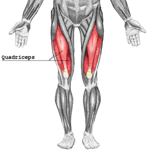 muscler quadriceps preparation ski